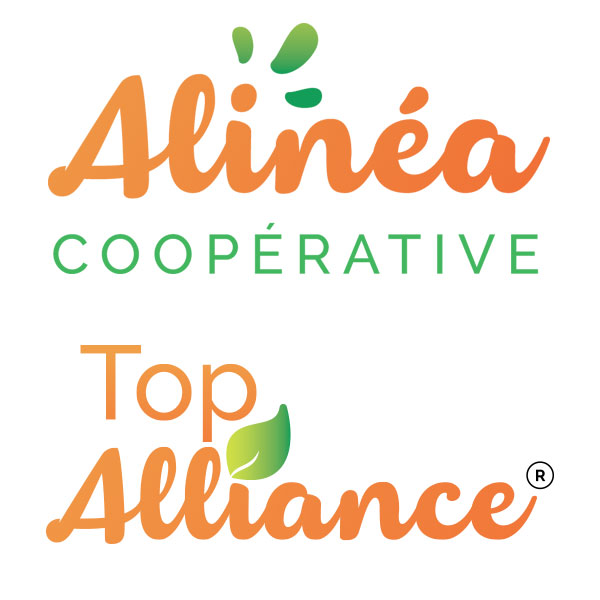 Top Alliance – Alinéa